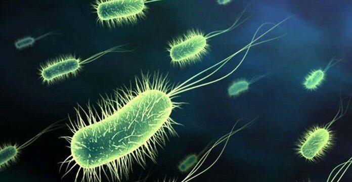 Konsorsium Mikroba Tingkatkan Ketahanan Ikan Nila pada Perairan Tercemar Tembaga
