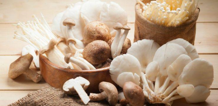 Amankah Jamur yang Kita Konsumsi?